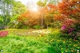 Kleurrijk bos tuinposter met ringen